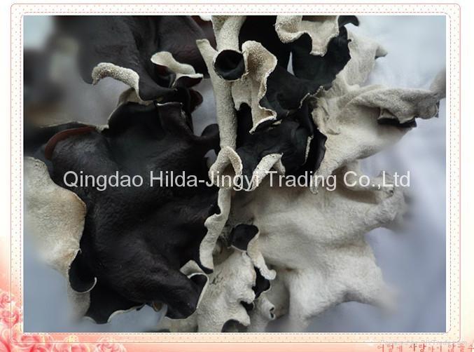 Dried white back black fungus  1