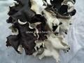 Dried white back black fungus sliced