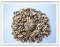 Dried shiitake mushroom  5