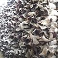Edible fungus