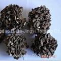 Maitakemushroom(Grifola frondosa) powder 2