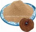 Reishi mushroom(Ganoderma lucidum) powder