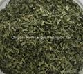 Stevia leaves cut  1
