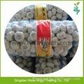 2015 Chinese Garlic 8