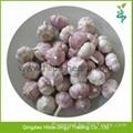 2015 Chinese Garlic 3