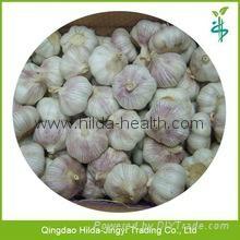 2015 Chinese Garlic 7