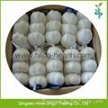 2015 Chinese Garlic 5