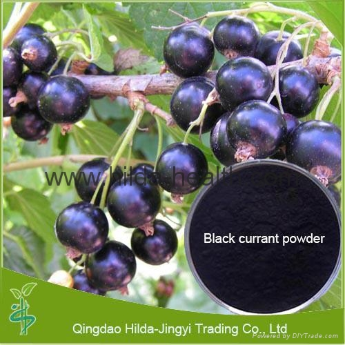 High Quality Black Currant Extract 3