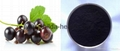 High Quality Black Currant Extract