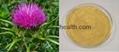Plant Extract Silymarin Milk Thistle Extract