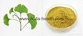 2015 Hot Sale Ginkgo Bioba Leaf Extract