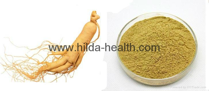 2015 Hot Sale Ginseng Extract 3