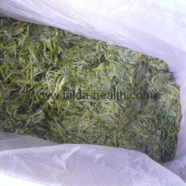 Frozen shredded seaweed wamake stem 15kgs carton