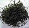 2019 Dried cut kelp(laminaria,sea tangle