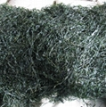 machine dried cut kelp swelling 15-18