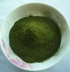 有机小麦苗绿素粉