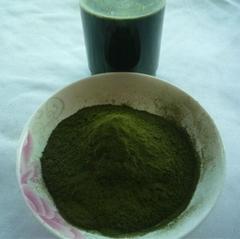 有機小麥苗提取物(麥綠素)