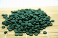 Wholesale Private Label Spirulina Extract Protein Spirulina Tablet
