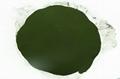 Algae Bio Chlorella powder  3