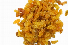 2020 best quality dried golden raisins