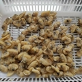 Cheap Frozen Clam Meat Short Necked Clam Meat Frozen Clam Meat