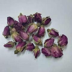 Rosebud Flower Tea Rose