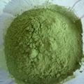 Organic Oat Grass Powder Best Price Bulk Oat Grass Powder Juice Powder 2