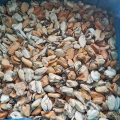 Wholesale Tasty Seafood Frozen Mussel Meat Without Shell