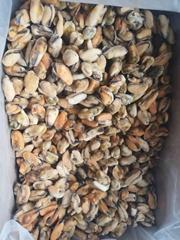 Good Quality Frozen Short Neck Clam Frozen Mussel Meat On Sales