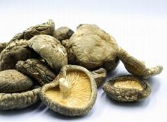 Shiitake Mushroom Bulk Dried Shiitake Mushrooms