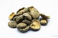 Whole Shiitake Mushroom Raw Shiitake