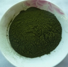 Young Wheat Grass Powder Wheatgrass Extract Organic Wheat Grass Powder