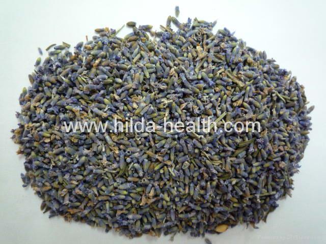Lavandula(lavender) 1
