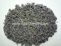 Lavandula(lavender)