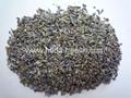 Lavandula(lavender) 3