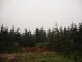低價出售各種綠化苗木如銀杏桂花香樟廣玉蘭黃葛樹小葉榕重陽木 3