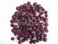HACCP Cretified Freeze Dried Black