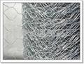 304Hexagonal wire mesh 3