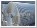 1/2热镀锌电焊网铁丝网养殖网