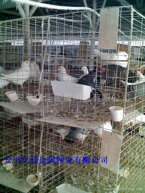 肉鸽笼 - 河北省 - 生产商 - 产品目录 - 安平亿佳