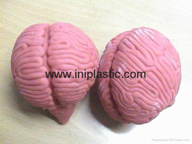 搪膠人腦|大腦模型|人腦模型|仿真人腦教具
