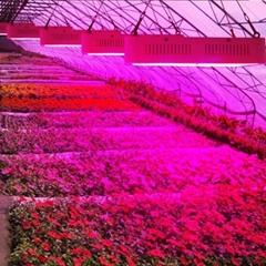 aquaponics growing systems popular grow light led 300w