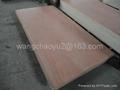 red hardwood  PLYWOOD