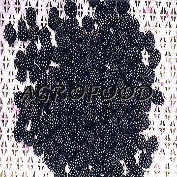 IQF blackberries 1