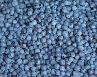 IQF blueberries 1