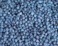 单冻 蓝莓