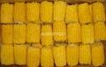 冷凍甜玉米 2