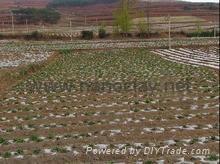 Soil improver  ADDEZ® SB