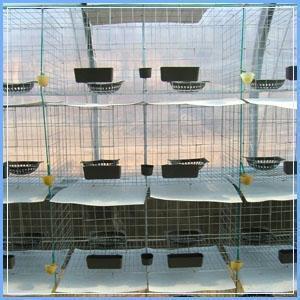 鸽子笼   肉鸽笼子 , 乳鸽笼子, 种鸽笼子    介绍: 养鸽专用笼