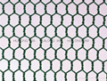 Required hexagonal wire mesh